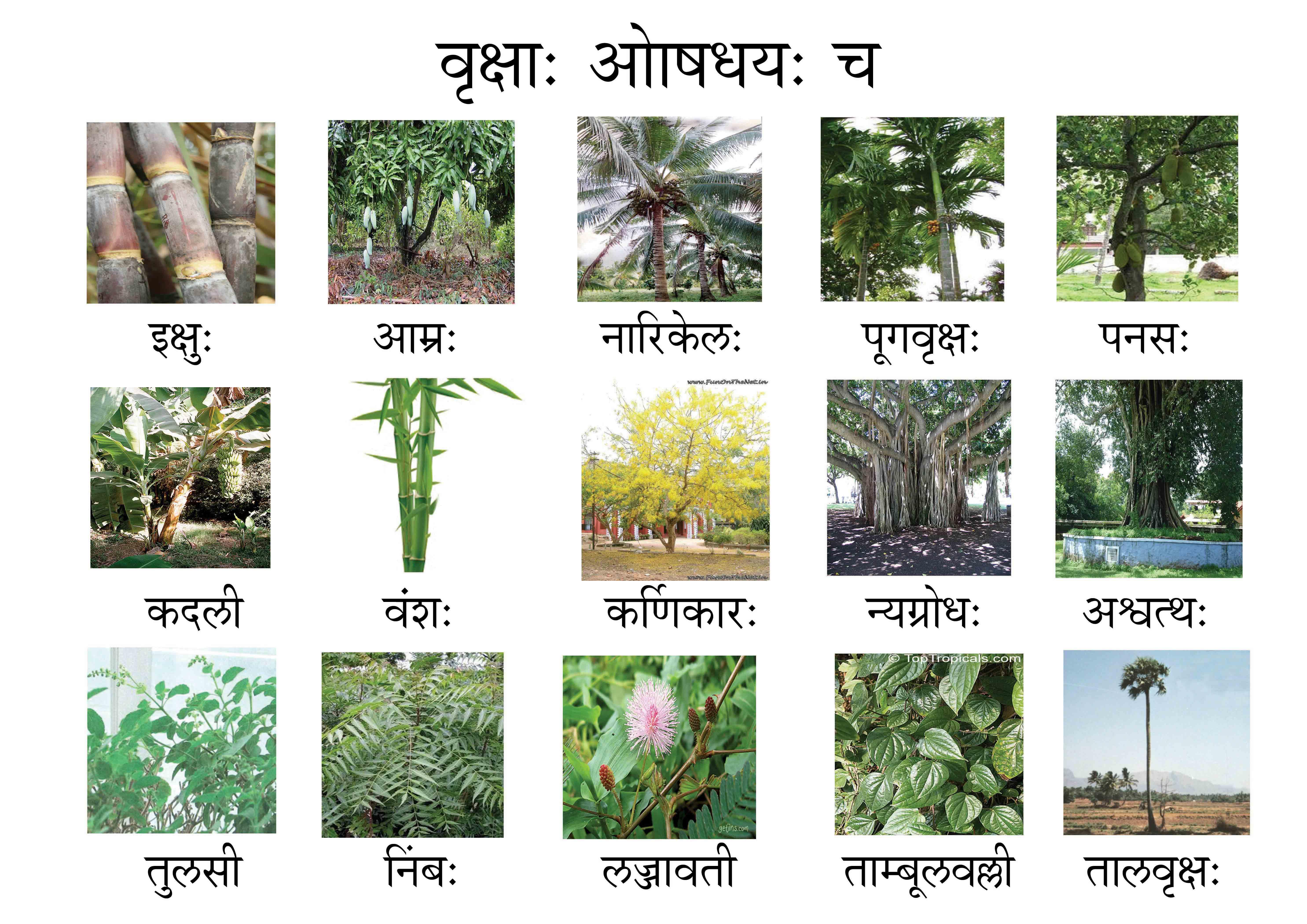 indan flowers name